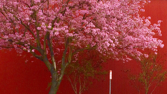 pink tree on red bkgd 01